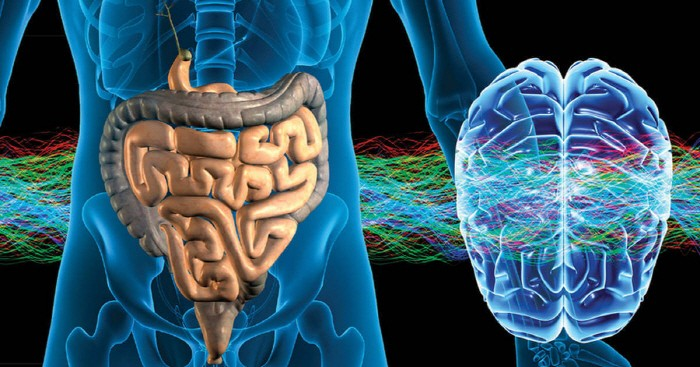 당신의 생각을 제어하는 '제2의 뇌' - 테크홀릭